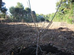 植え替え後の南高の梅園