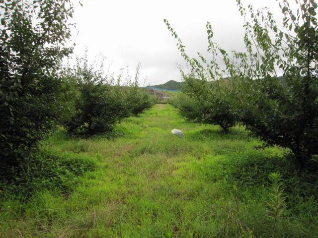 伏村農園の梅林